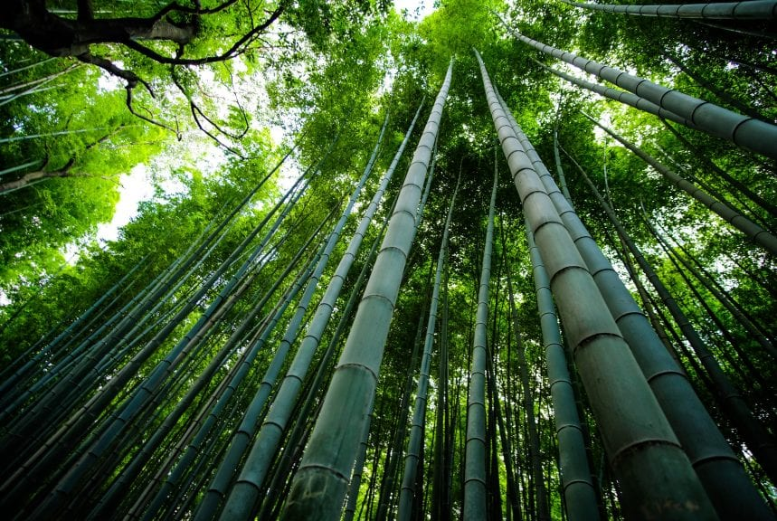 bamboo trees scenery