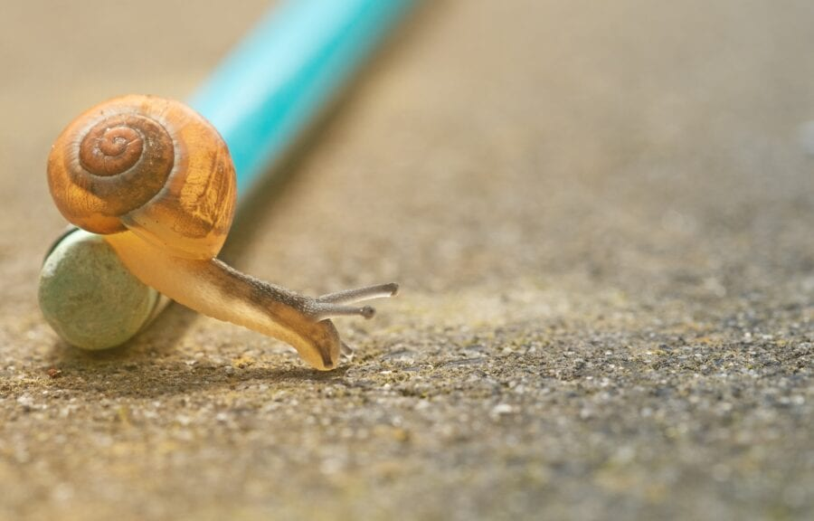 closeup photo of orange snail crawling down pencil on ground
